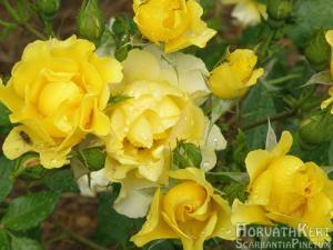 A nyár a virágok évszaka.