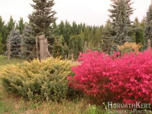 Hűha. Balra Juniperus communis 'Depressa Aurea'.