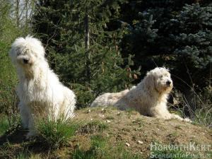 Élvezik a tavaszi napfényt a kutyák. Rozi és Picur.