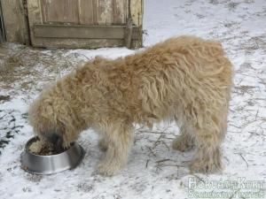 Enni télen is kell. Barnus.